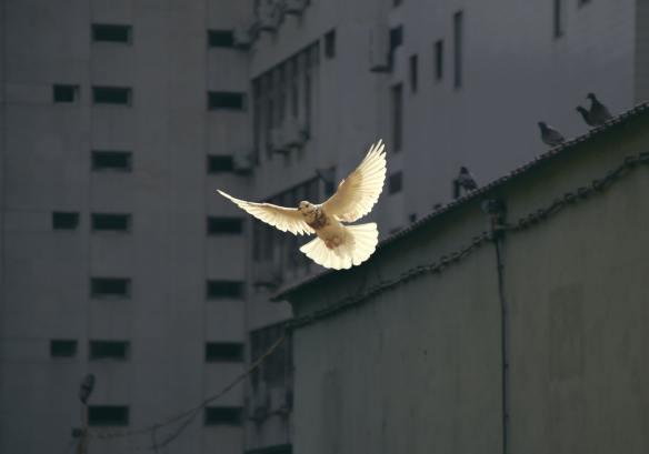 vrede unsplash
